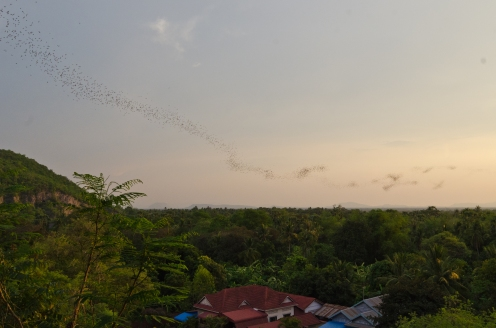 Colony of bats flying > TheRoamingNoodle