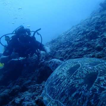 Sea turtle while diving in Borneo