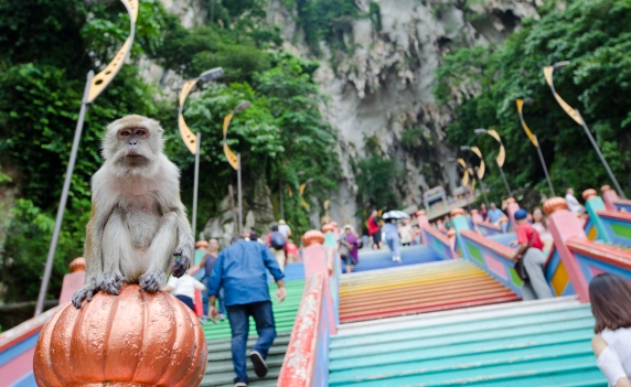 Monkeys at Batu Caves > TheRoamingNoodle