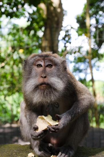 Sacred Monkey Forest Sanctuary > Bali > TheRoamingNoodle