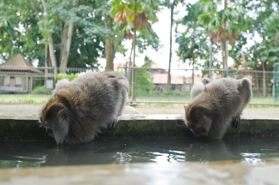 Sacred Monkey Forest Sanctuary > Ubud, Bali > TheRoamingNoodle