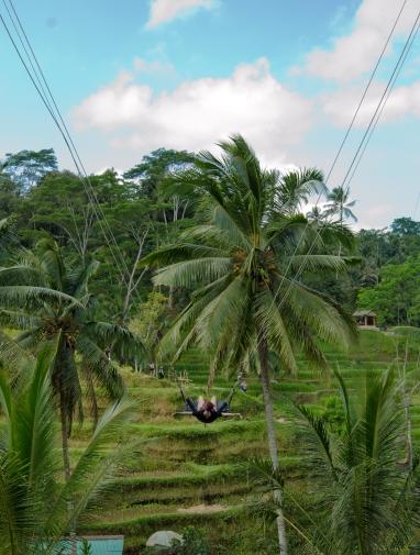 Bali's Rice Terraces > Bali > TheRoamingNoodle