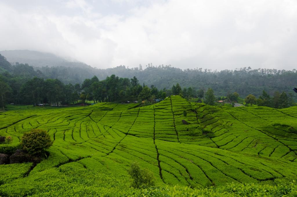 Bandung, West Java Island > TheRoamingNoodle